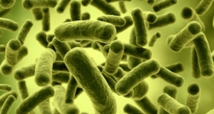 Antimicrobial Resistance: Induced Adaptation of Bacillus sp. to Antimicrobial Nanosilver