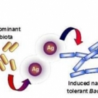 Induced adaption of bacteria to antimicrobial nanosilver - Small (2013)